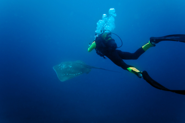 Diver with a ray